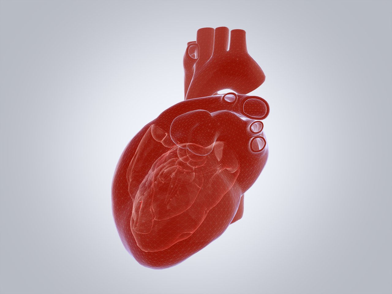 Graphics of a human heart